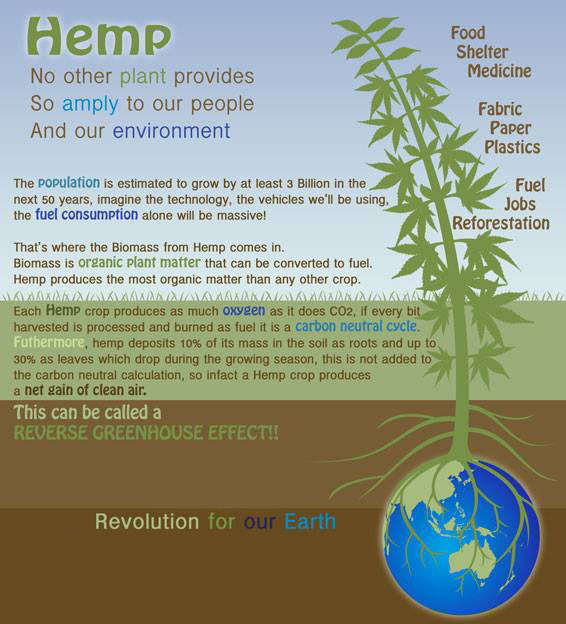 hemp-inforgraphic-2